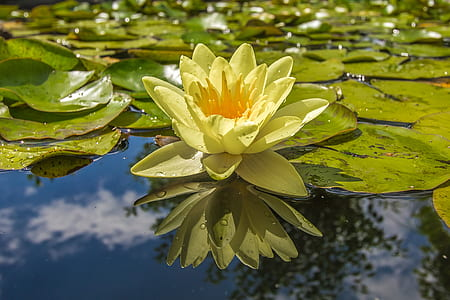 water lily in body of water during daytime