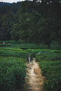 brown pathway
