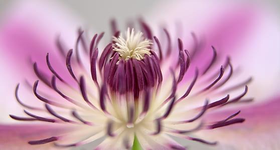 purple flower pollen selective focus photography