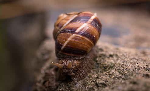 Depth of Field Photography Of Snail