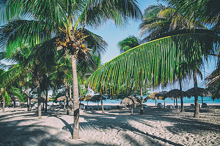 A perfect Caribbean beach with palm trees, image captured in Varadero, Cuba
