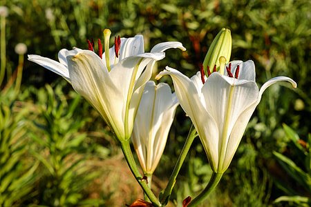 close up photography of white petaled flower