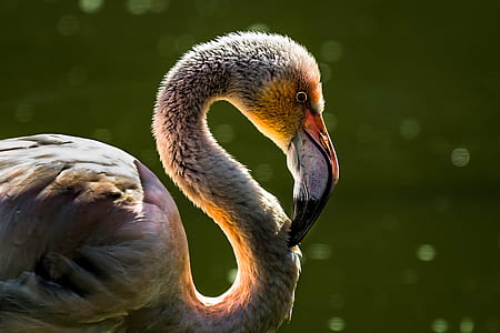 white flamingo selective focus photo