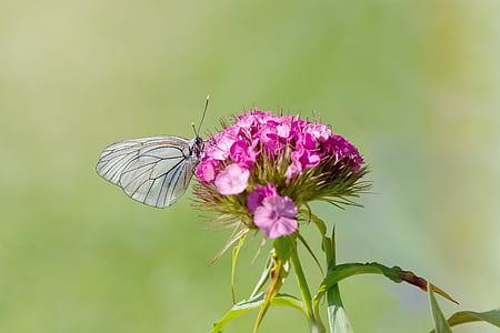 Grey Butterfly Perching on Purple Petal Flower