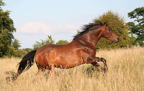 horse photography during daytime