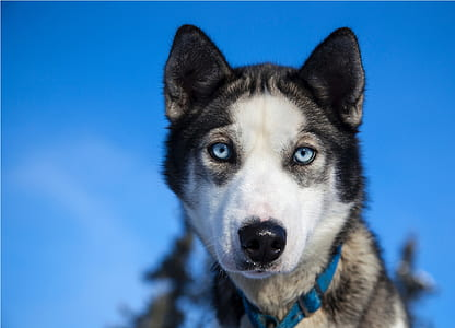wildlife photography of wolf