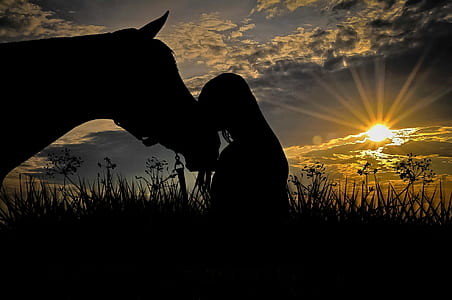 silhouettes of person in front of horse