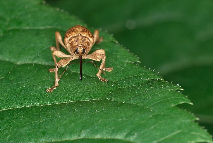 brown weevil on green leaf