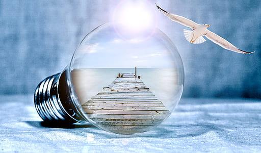 clear light bulb near seagull