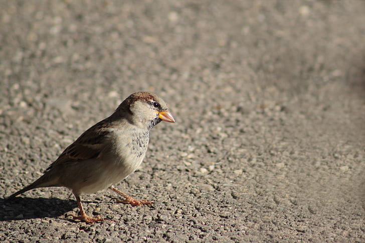 grey and brown bird on grey concrete surface at daytime