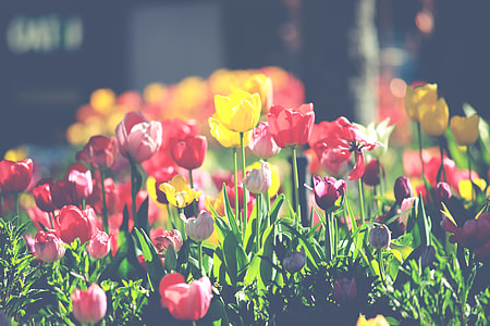 assorted-color tulips during daytime