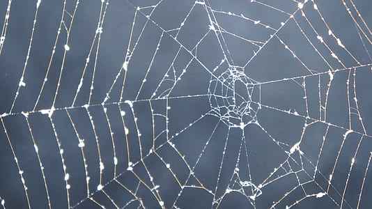 close up photography of web with morning dew at daytime