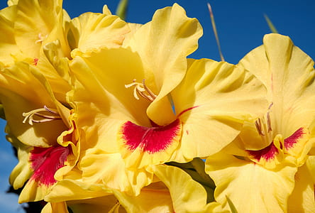 yellow and red petaled flowers