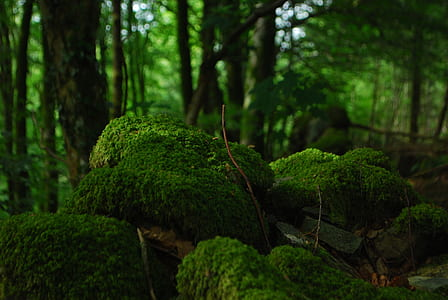 selective focus photography of green moss