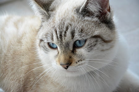 close-up photography of brown and white cat