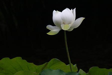white petaled flower on bloom