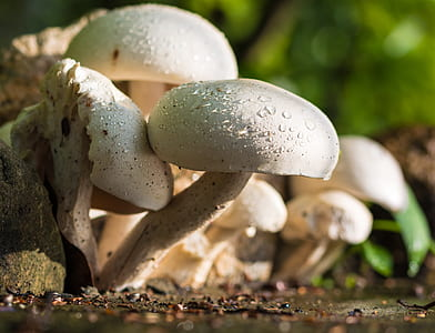 macro shot of white mushrooms