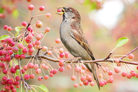 brown and gray bird on brown tree stem