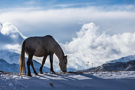 Horse in winter snow and ice