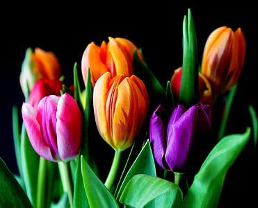 orange and orange tulips on bloom