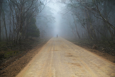 person standing in the middle of the road surrounded by trees