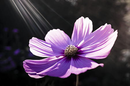 purple petaled flower at bloom