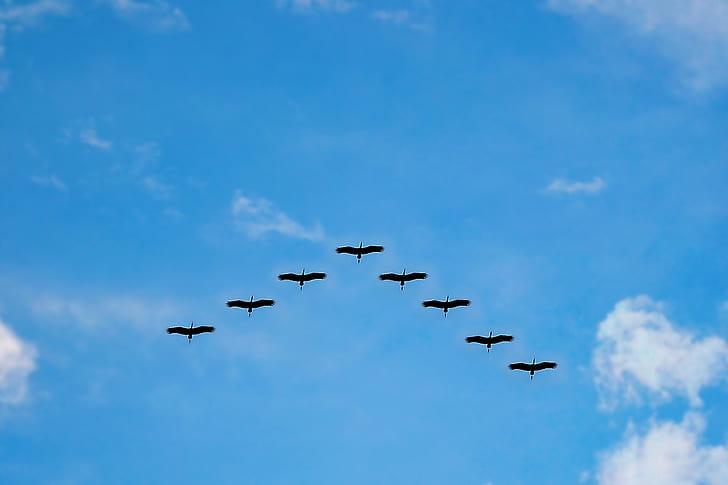 eight flying birds in the sky