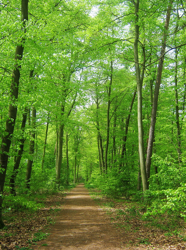 trail between green trees