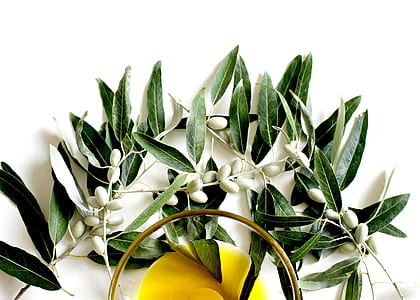 white and green leaf plant wall decor