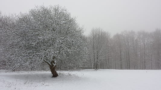 landscape photography of bare tree coated by snow ice