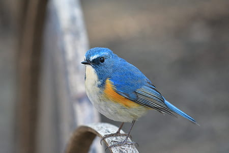 selective focus photography of bluebird perched on grey metal bar