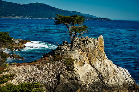 landscape photo of green leaf tree above the cliff
