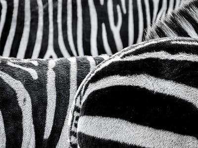 black and white textile