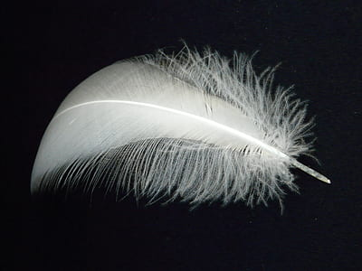 white feather on black surface