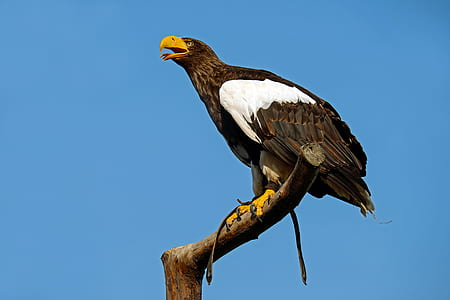 black and white eagle landed on tree branch under blue and white sunny sky during daytime