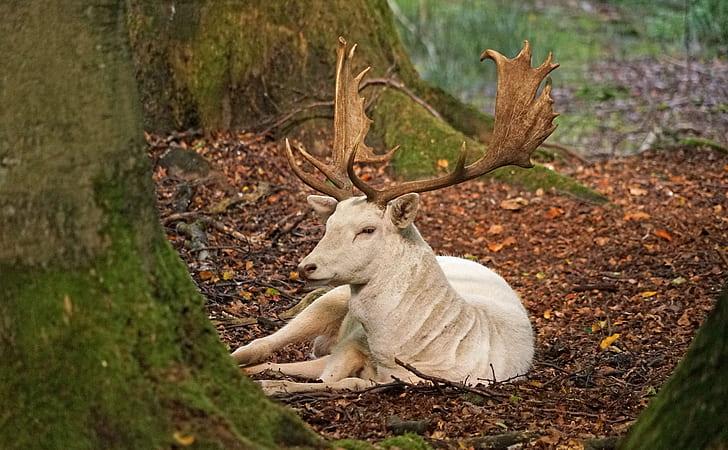 white deer sitting on brown leaves