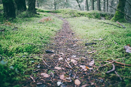 close-up photo of pathway between grass