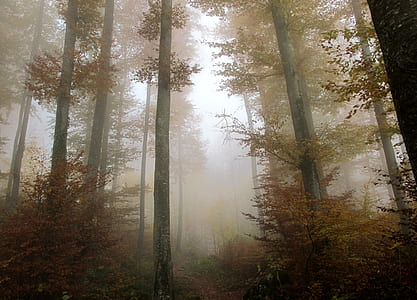 fogged woods