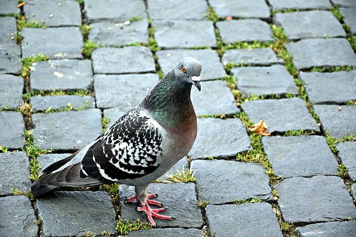 gray pigeon on concrete brick floor