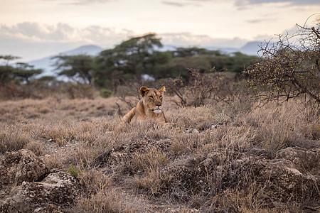 wildlife, animals In The Wild, africa, safari Animals