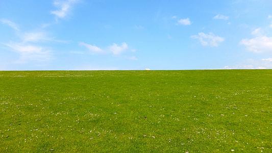 green grass plain