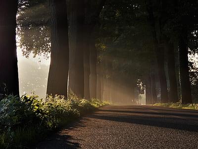 wide road between trees