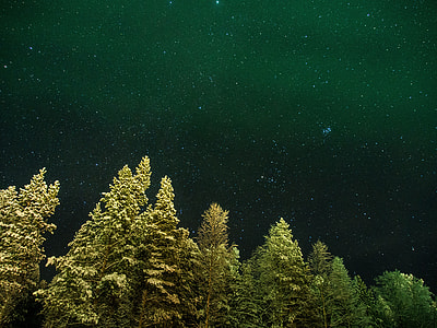 worms eye view of pine trees under starry night