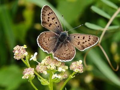 tilt shift photo of brown moth