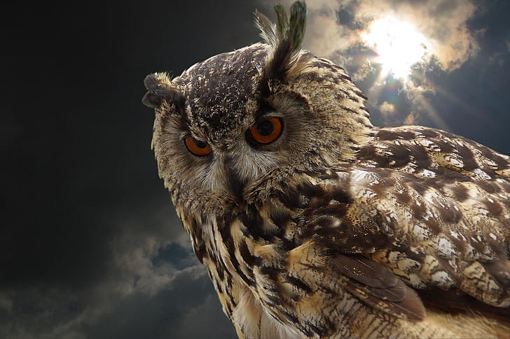 shallow focus photo of brown and black owl