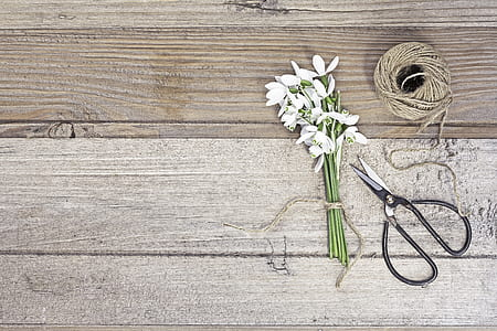 white and green flowers and black metal scissors