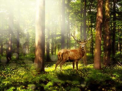brown deer inside the forest