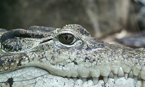 close up photo of alligator head