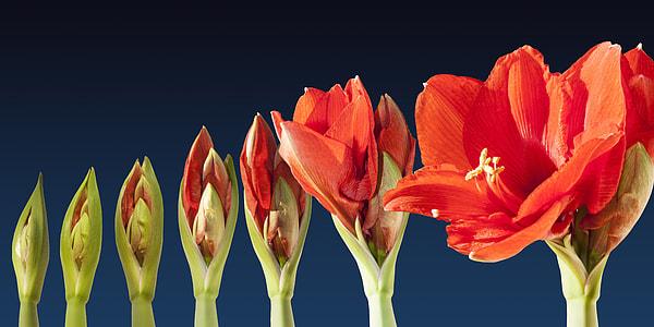 red petaled flower in bloom