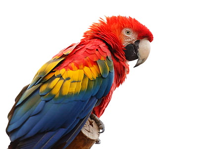 multicolored parrot on brown wood
